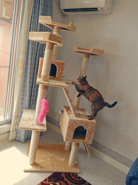 Best ideas about Cat Tree Plans DIY . Save or Pin stupid86xzy Now.