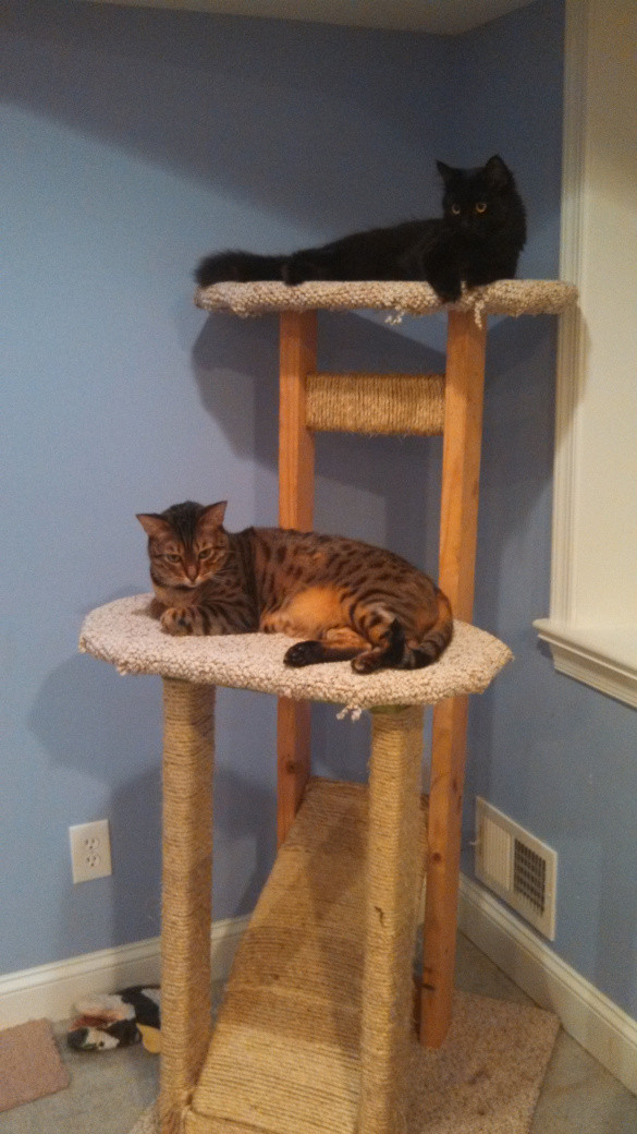 Best ideas about Cat Tree Plans DIY . Save or Pin Build Simple Cat Tree DIY cedar mailbox plans Now.