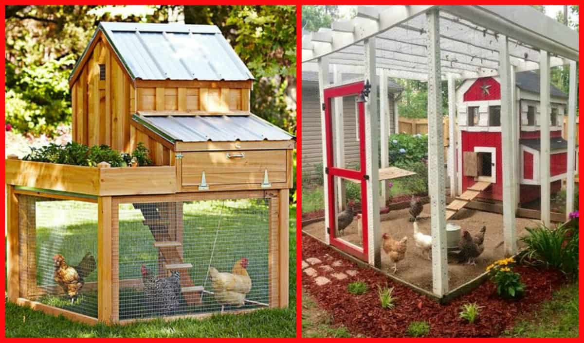 Best ideas about Chicken Coop DIY . Save or Pin 100's Free Chicken Coop Plans Now.