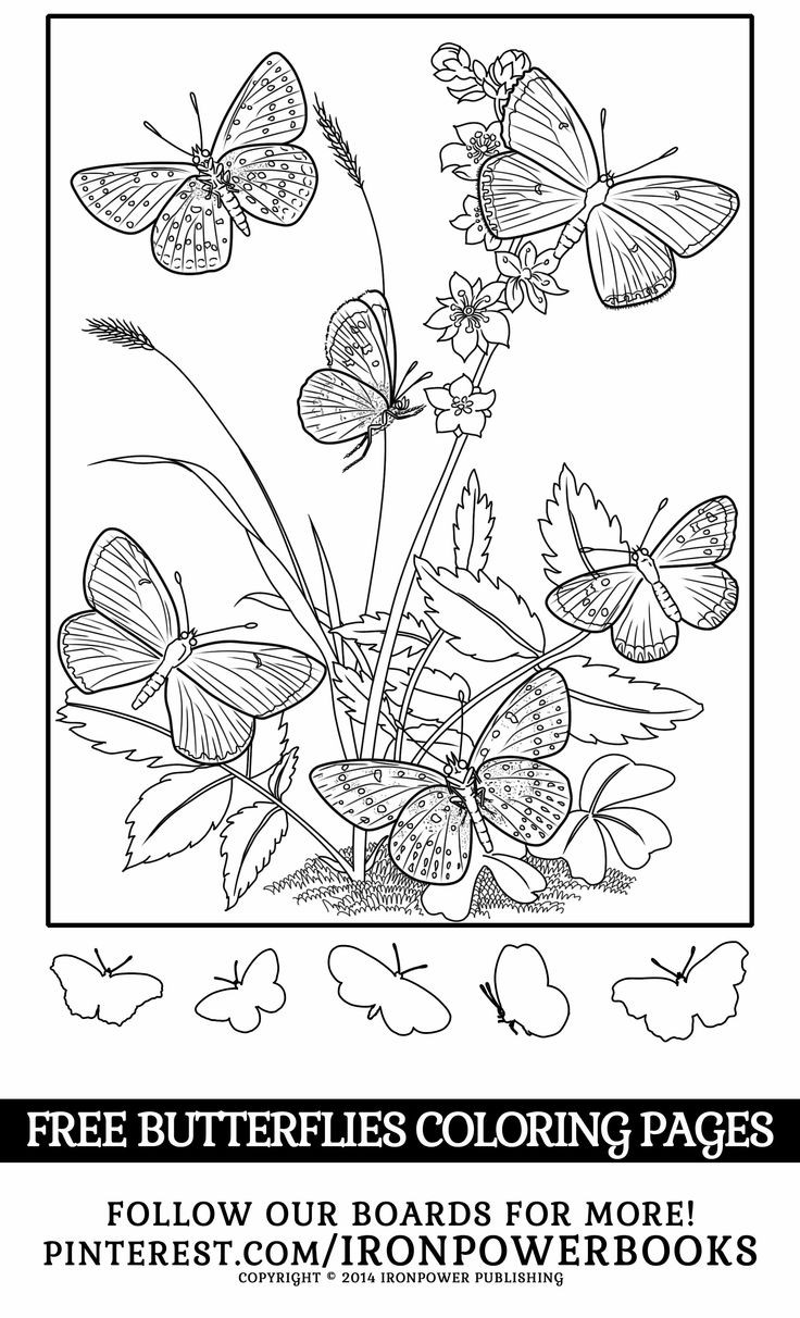 Best ideas about Coloring Sheets For Girls Butterfly . Save or Pin 87 best butterfly coloring pages images on Pinterest Now.