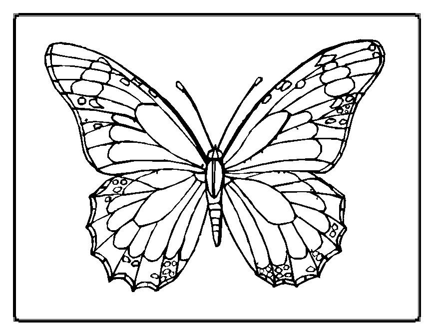 Best ideas about Coloring Sheets For Girls Butterfly . Save or Pin Cute and Beauty Butterfly Coloring Sheet Now.