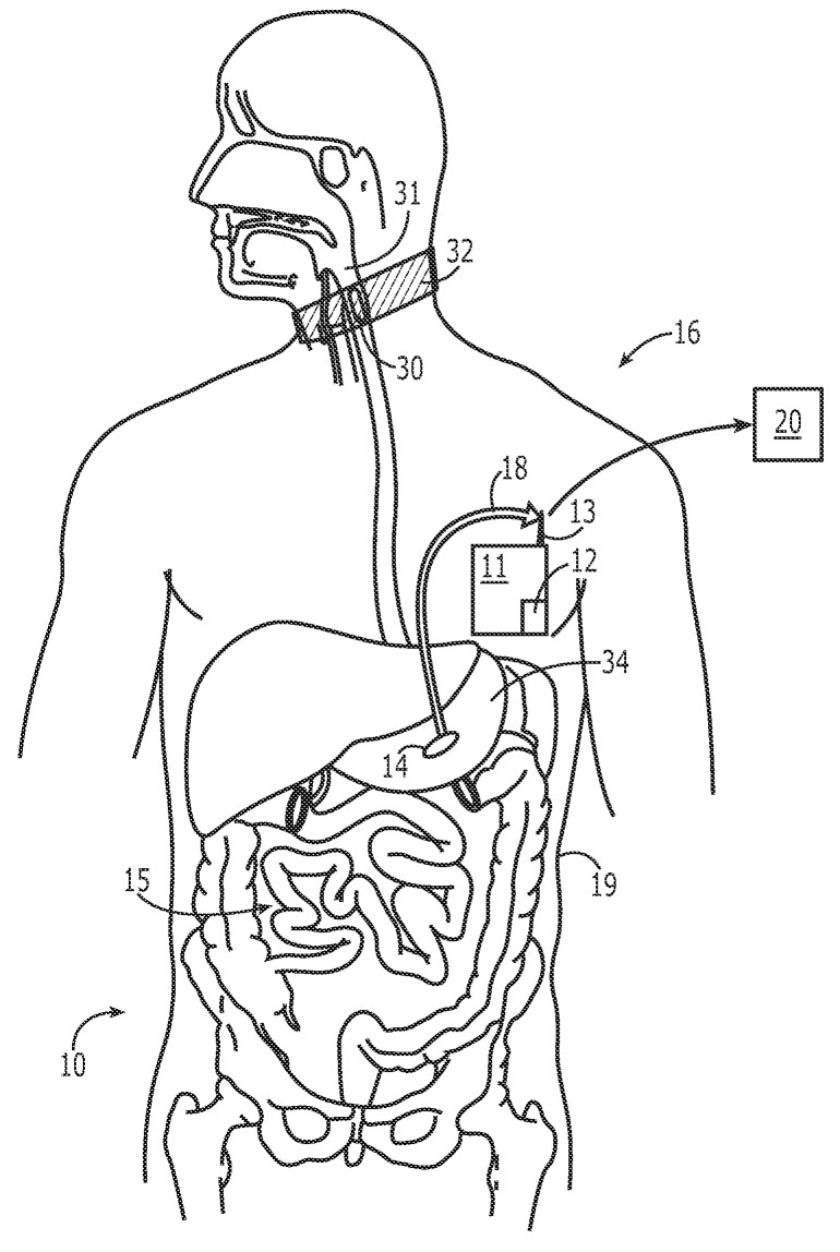Best ideas about Digestive System Coloring Sheets For Kids . Save or Pin Coloring Pages Digestive System Coloring Home Now.