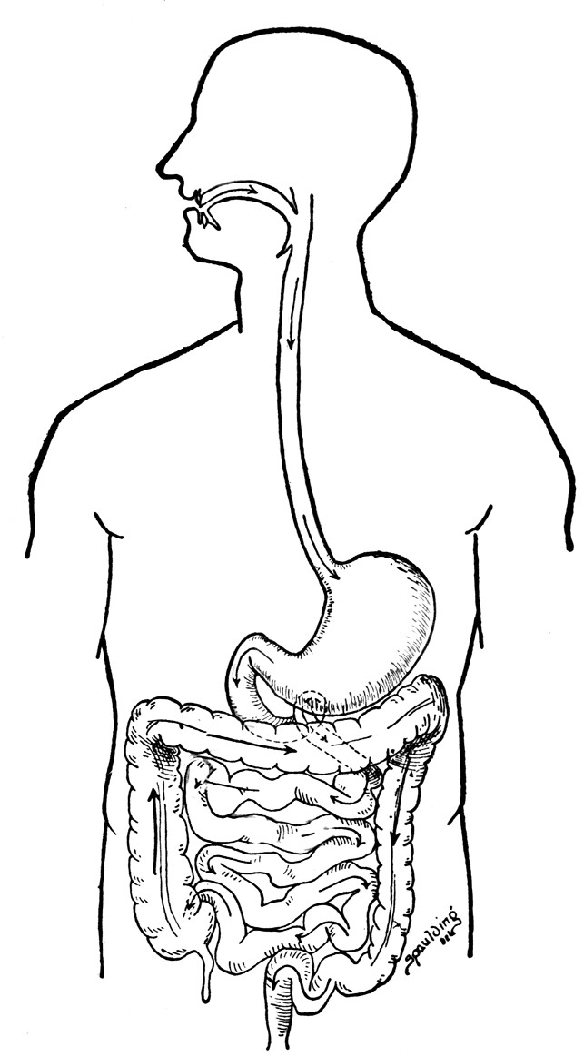 Best ideas about Digestive System Coloring Sheets For Kids . Save or Pin Digestive System Coloring Page Coloring Home Now.