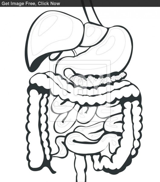 Best ideas about Digestive System Coloring Sheets For Kids . Save or Pin Digestive System Now.