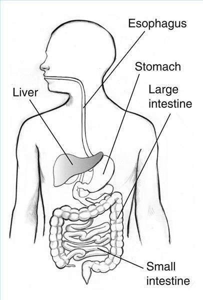 Best ideas about Digestive System Coloring Sheets For Kids . Save or Pin Digestive System Blank Diagram for Kids Now.