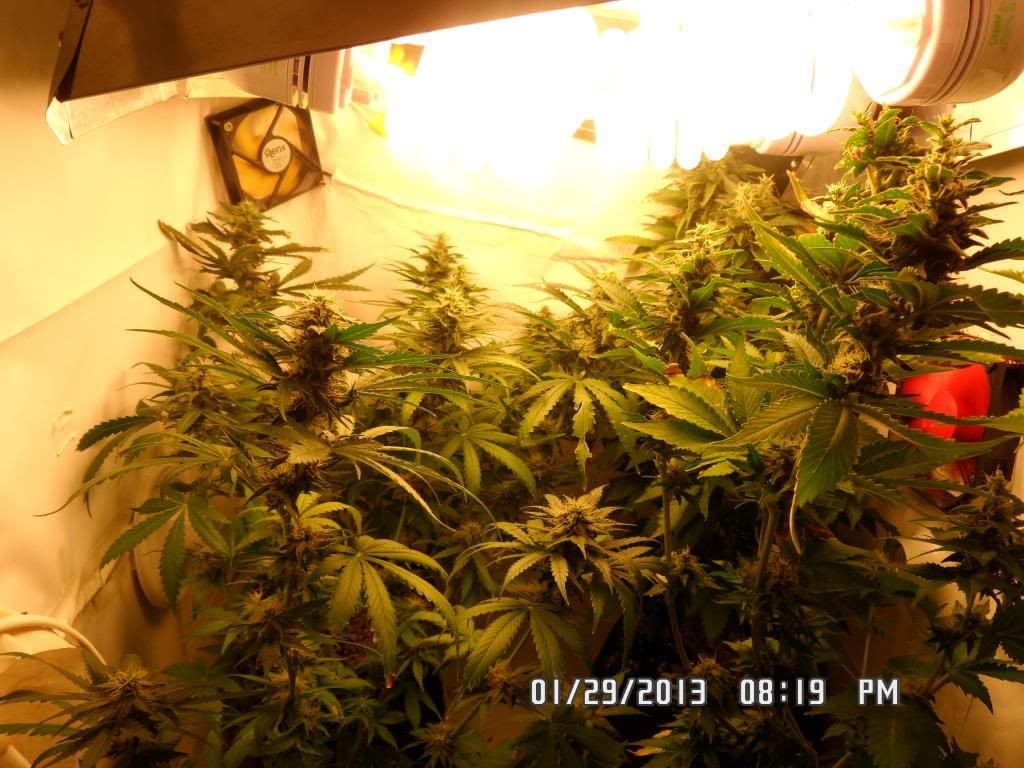 Best ideas about DIY 4Oz Minimum Yield Grow Box . Save or Pin Small Diy Grow Now.