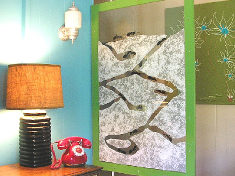 Best ideas about DIY Ant Farm . Save or Pin Ant Farm Room Divider Now.