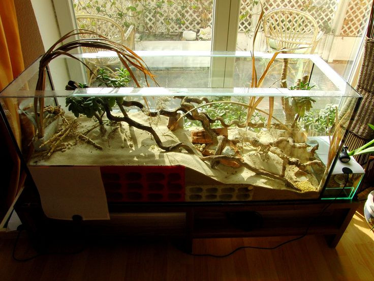Best ideas about DIY Ant Farm . Save or Pin 78 best images about Ant Formicarium on Pinterest Now.