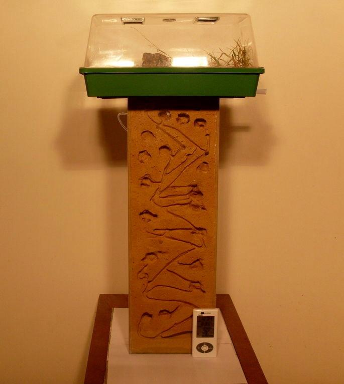 Best ideas about DIY Ant Farm . Save or Pin DIY Vertical Ant Farm petdiys Now.