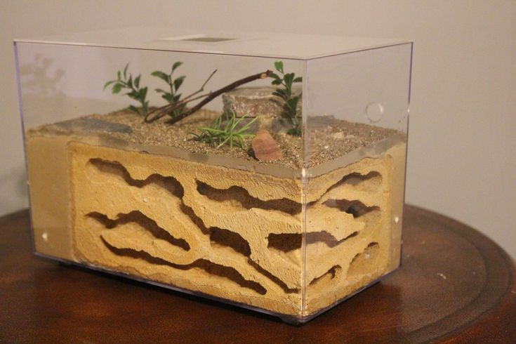 Best ideas about DIY Ant Farm . Save or Pin The Pinnacle Famous in it s own right this is one of our Now.