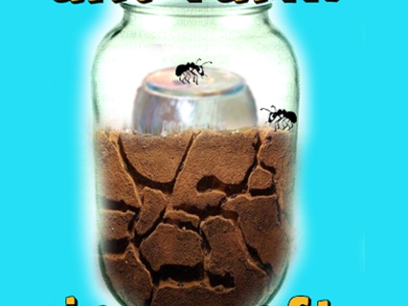 Best ideas about DIY Ant Farm . Save or Pin Make an Ant Farm Now.