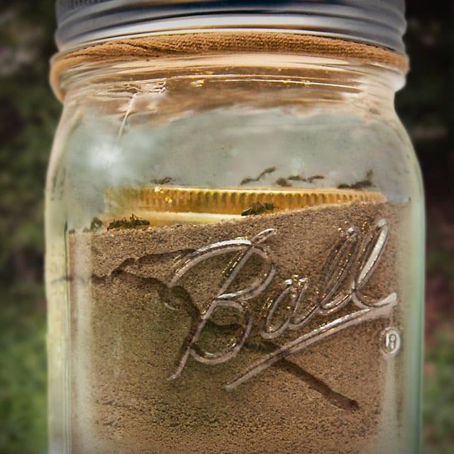Best ideas about DIY Ant Farm . Save or Pin Mason Jar Ant Farm Now.