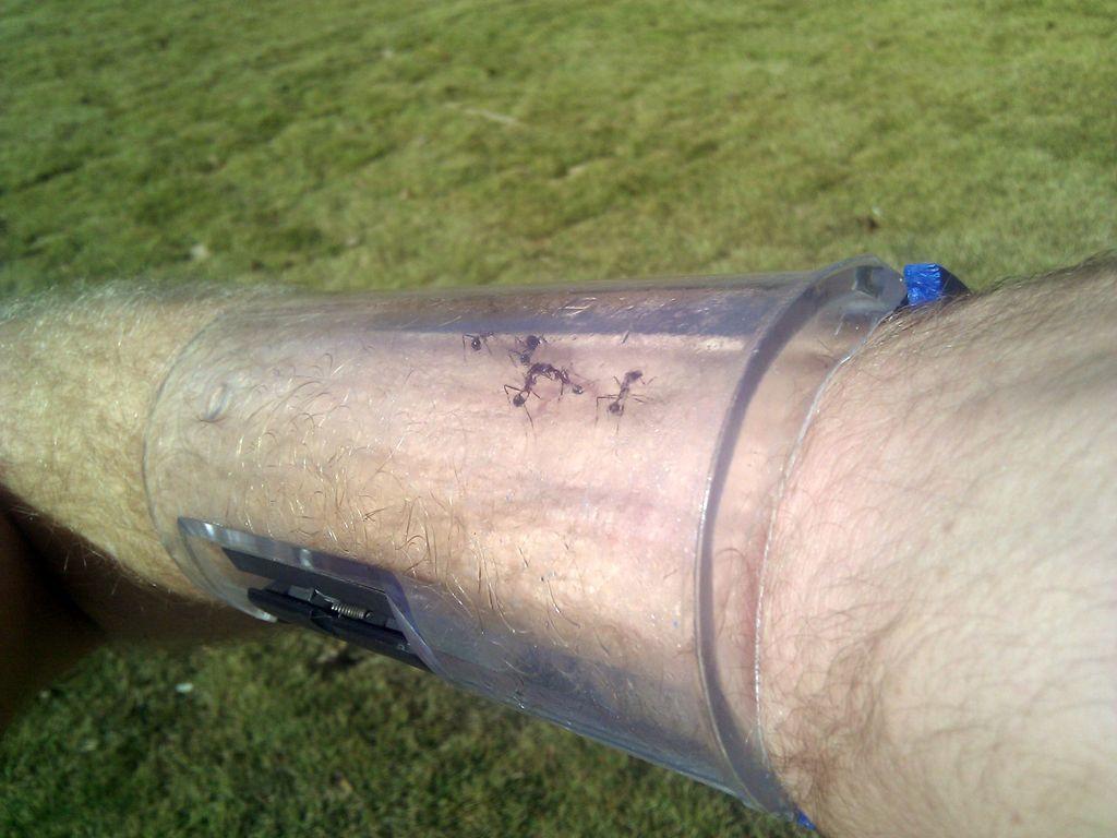 Best ideas about DIY Ant Farm . Save or Pin DIY Ant Farm Arm Cuff petdiys Now.