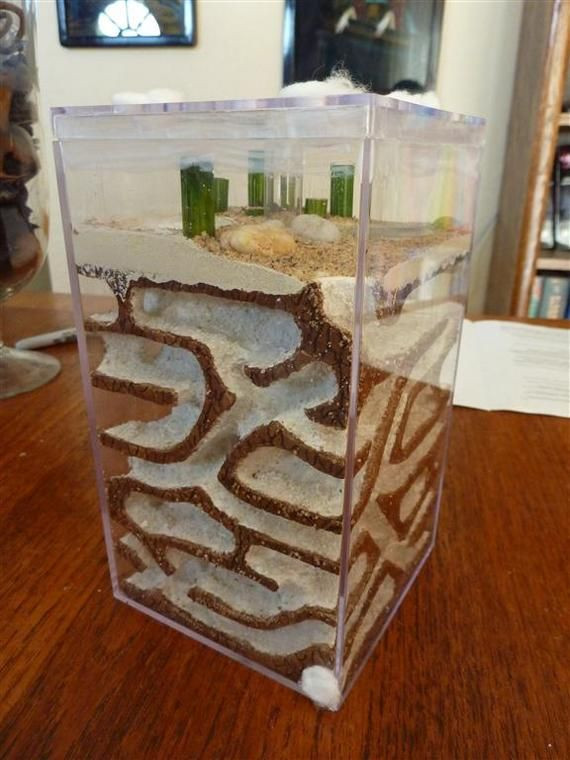 Best ideas about DIY Ant Farm . Save or Pin 17 best images about DIY Ant Farm on Pinterest Now.