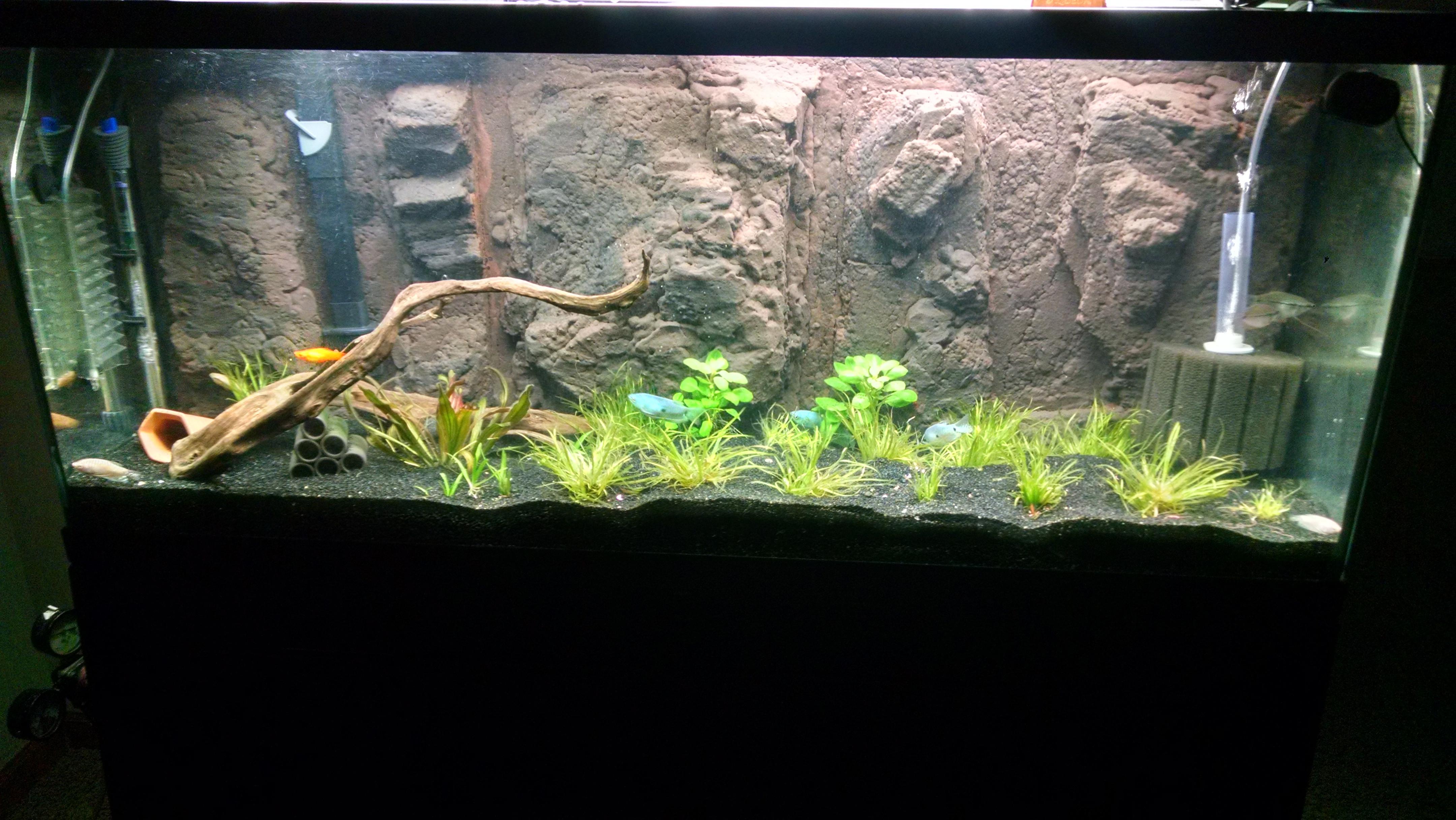 Best ideas about DIY Aquarium Background . Save or Pin DIY 3D Background for aquarium Now.