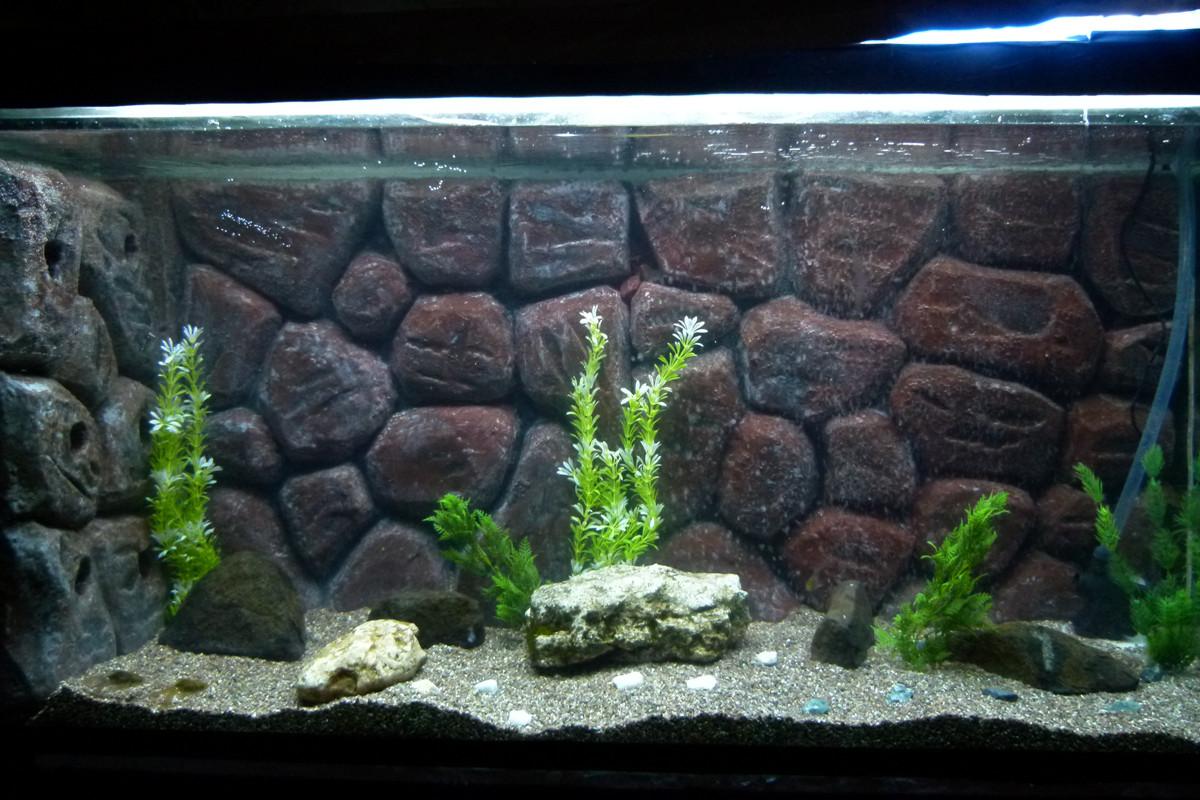 Best ideas about DIY Aquarium Background . Save or Pin cichlids rabee3 new DIY aquarium Now.