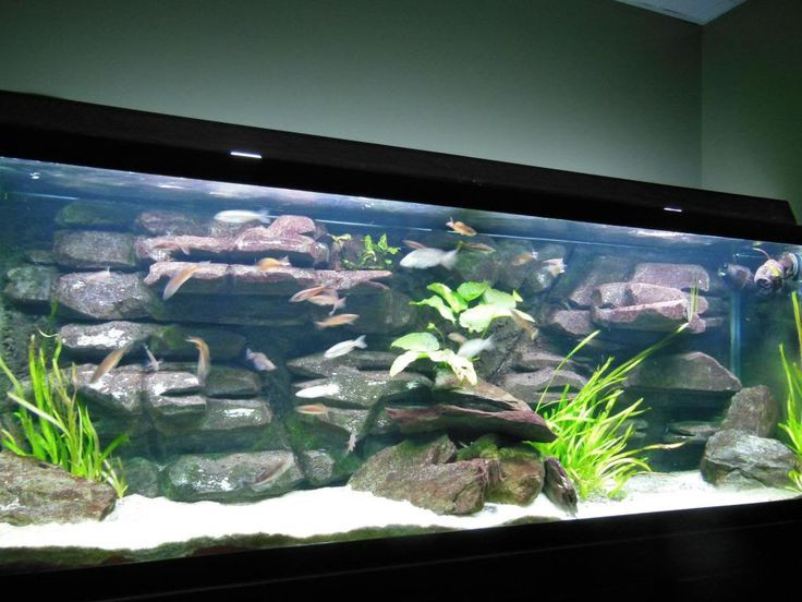 Best ideas about DIY Aquarium Background . Save or Pin DIY 3D background after 3 years Now.