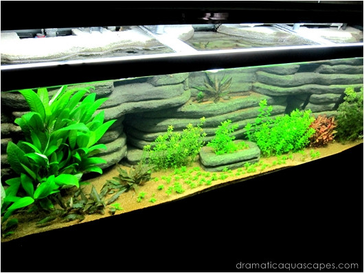 Best ideas about DIY Aquarium Background . Save or Pin Get Inspired with these 9 DIY Aquarium Backgrounds TFCG Now.