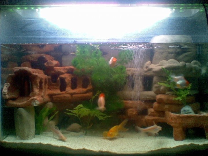 Best ideas about DIY Aquarium Background . Save or Pin Live life to the fullest DIY Aquarium Backgrounds Now.