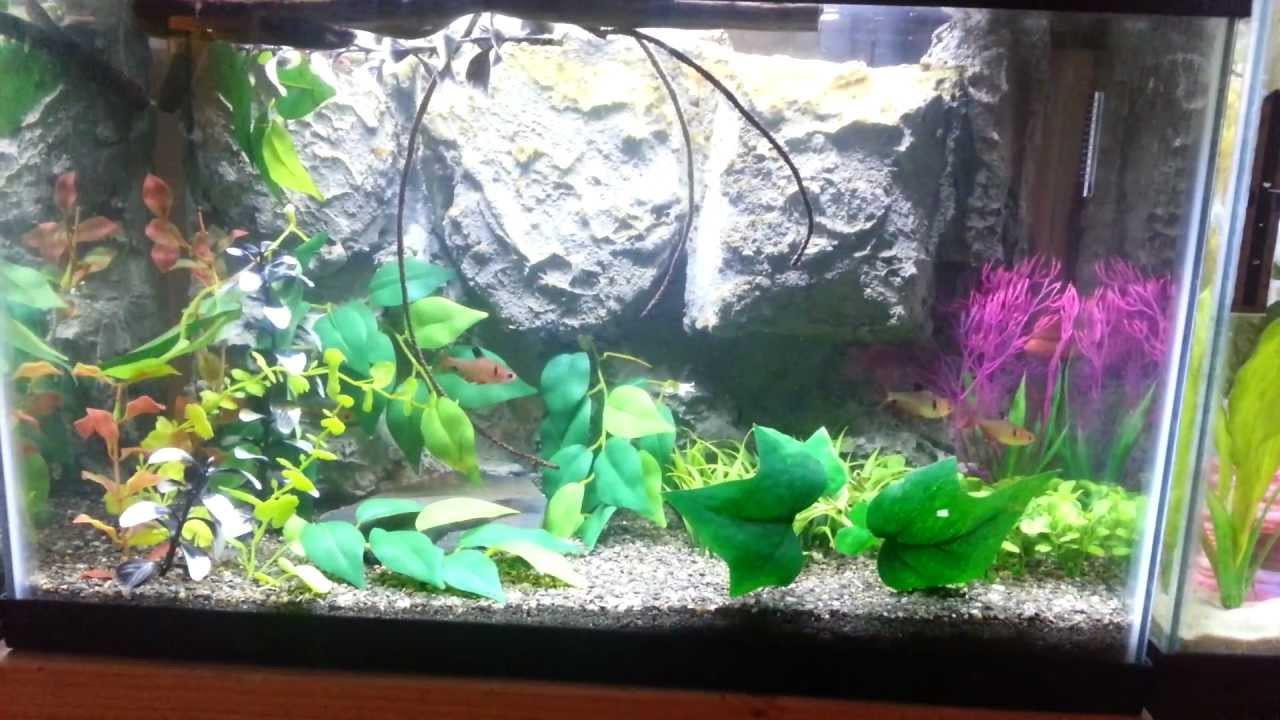 Best ideas about DIY Aquarium Background . Save or Pin 10 Gallon Aquarium W DIY Background Now.