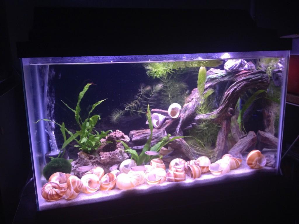 Best ideas about DIY Aquarium Background . Save or Pin DIY Fabric Aquarium Background petdiys Now.