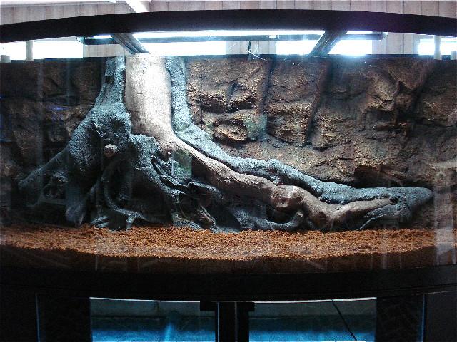 Best ideas about DIY Aquarium Background . Save or Pin 3d Scanner Image 3d Aquarium Background Now.