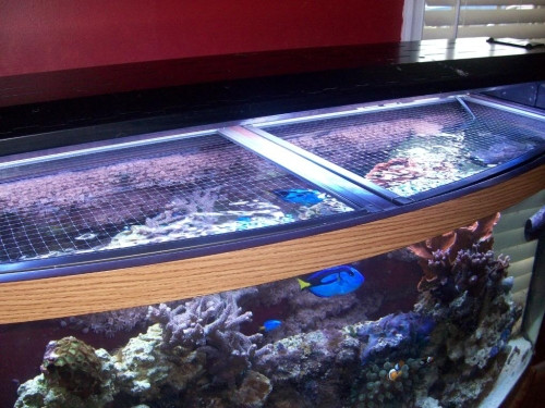 Best ideas about DIY Aquarium Lid . Save or Pin DIY Mesh Top to Keep Fish From Jumping Page 2 Now.