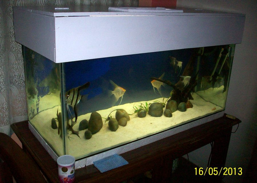 Best ideas about DIY Aquarium Lid . Save or Pin DIY Fish Tank Canopy Now.