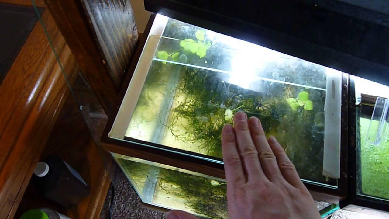 Best ideas about DIY Aquarium Lid . Save or Pin DIY aquarium glass lid Now.