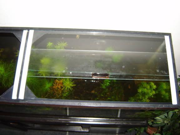 "Best ideas about DIY Aquarium Lid . Save or Pin link DIY ""How To"" Guide Sliding Glass Top Aquarium Now."