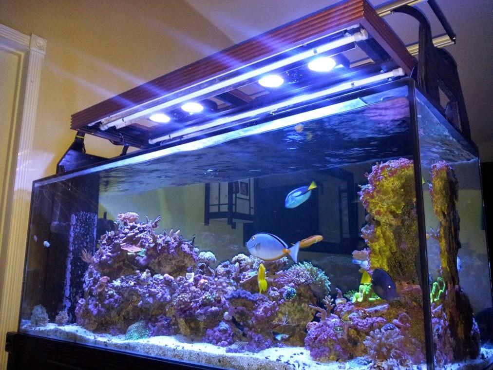 Best ideas about DIY Aquarium Light . Save or Pin My DIY Hood for T5 & Radion LED Lighting Marine Depot Blog Now.