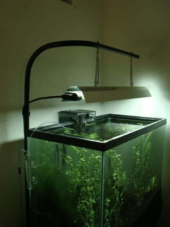 Best ideas about DIY Aquarium Light . Save or Pin Location Honolulu HI Now.