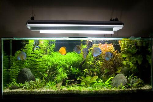 Best ideas about DIY Aquarium Light . Save or Pin DIY Aquarium Lighting Now.
