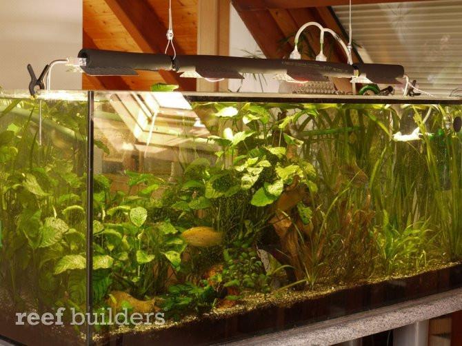 Best ideas about DIY Aquarium Light . Save or Pin Watercooled Aquarium LED light also recaptures heat Now.