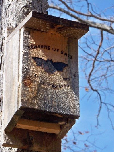 Best ideas about DIY Bat Box . Save or Pin Bat House Plans – Tips For Building A Bat House And Now.