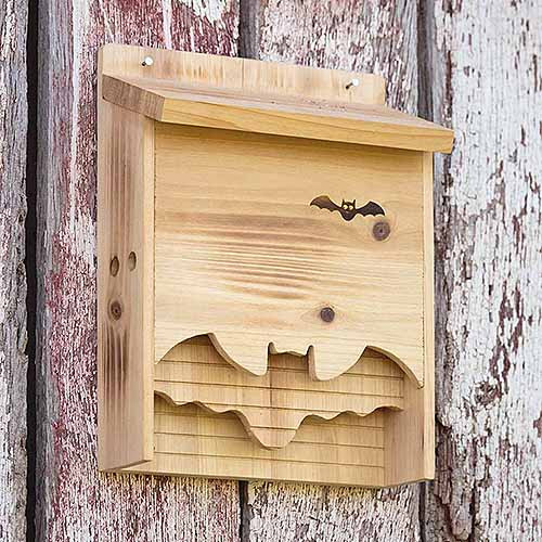 Best ideas about DIY Bat Box . Save or Pin How to Build a Bat Box with DIY Instructions Now.