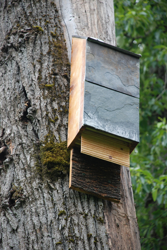 Best ideas about DIY Bat House . Save or Pin Natural Pest Control Benefits of Bat Houses Buildipedia Now.