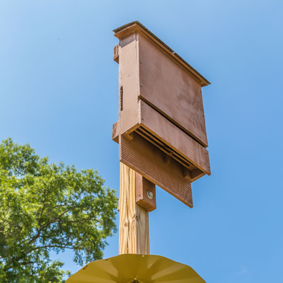 Best ideas about DIY Bat House . Save or Pin Use Bat Houses for Mosquito Control Nature and Now.