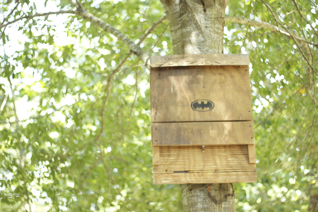 Best ideas about DIY Bat House . Save or Pin Free Bat House Plans Do It Yourself Plans DIY Free Now.