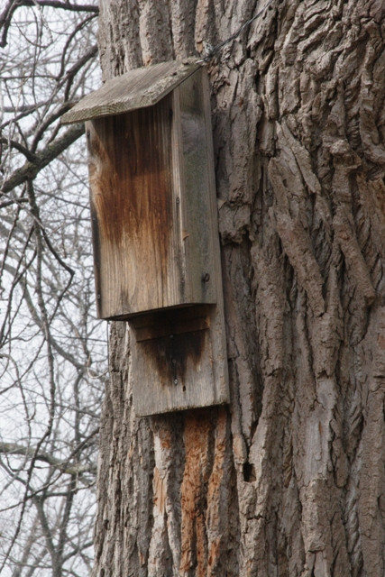 Best ideas about DIY Bat House . Save or Pin How to Build a Bat House Now.