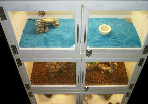 Best ideas about DIY Bearded Dragon Cage . Save or Pin 17 Best images about Reptile Cage Diy Now.