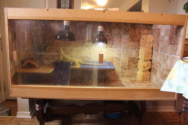 Best ideas about DIY Bearded Dragon Cage . Save or Pin Bearded Dragon Enclosure 5 Steps with Now.