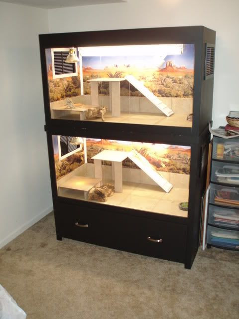 Best ideas about DIY Bearded Dragon Cage . Save or Pin Best 25 Bearded dragon cage ideas on Pinterest Now.