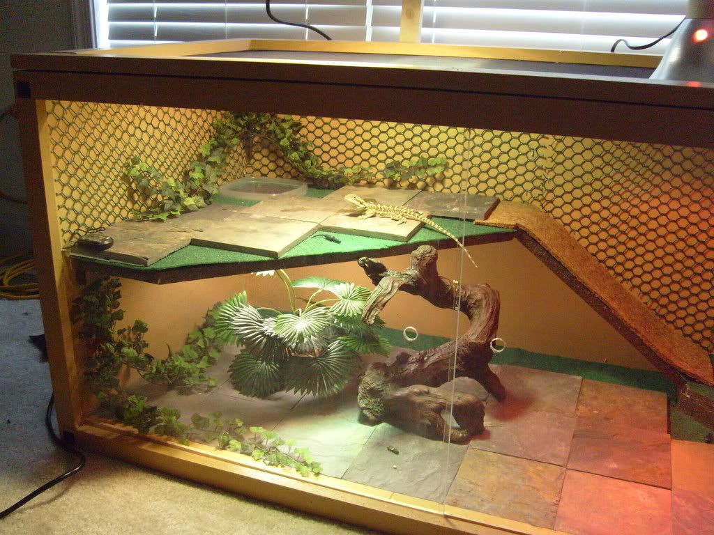 Best ideas about DIY Bearded Dragon Cage . Save or Pin Bearded Dragon Habitat on Pinterest Now.