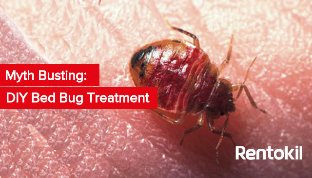 Best ideas about DIY Bed Bug . Save or Pin Myth Busting DIY Bed Bug Treatment Now.