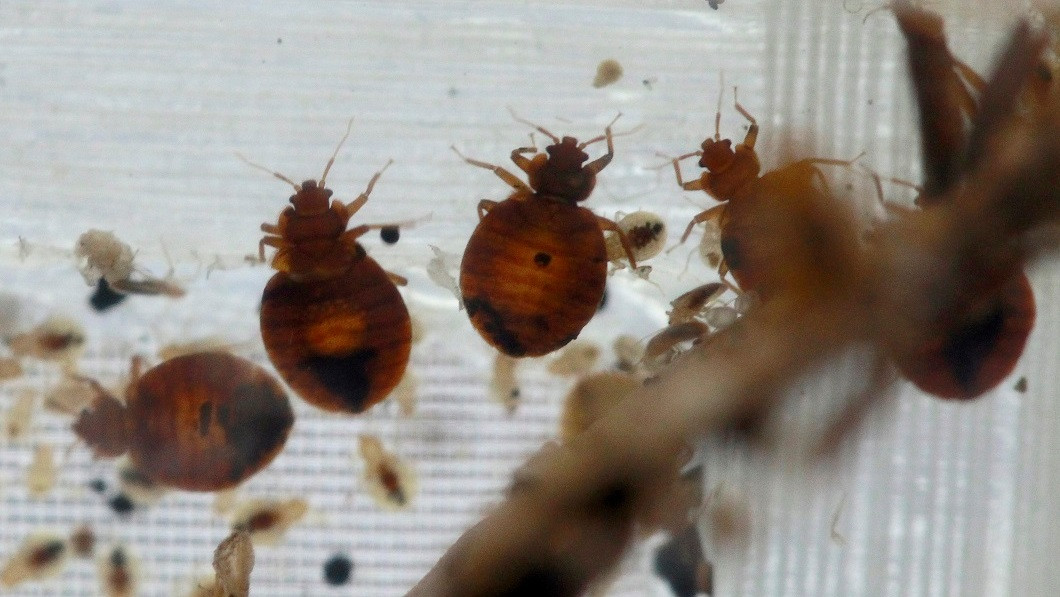 Best ideas about DIY Bed Bug . Save or Pin DIY Bed Bug Treatment Attempt Accidentally Results In Now.