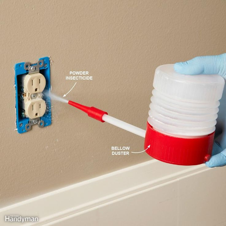Best ideas about DIY Bed Bug . Save or Pin Best 25 Bed bug reme s ideas on Pinterest Now.