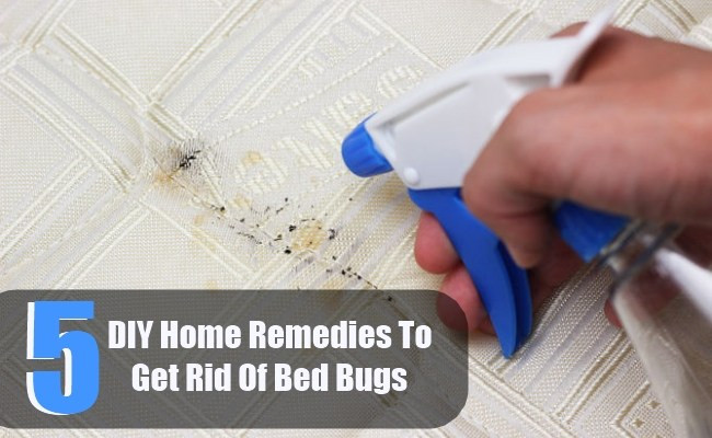 Best ideas about DIY Bed Bug . Save or Pin 5 DIY Home Reme s To Get Rid Bed Bugs Now.