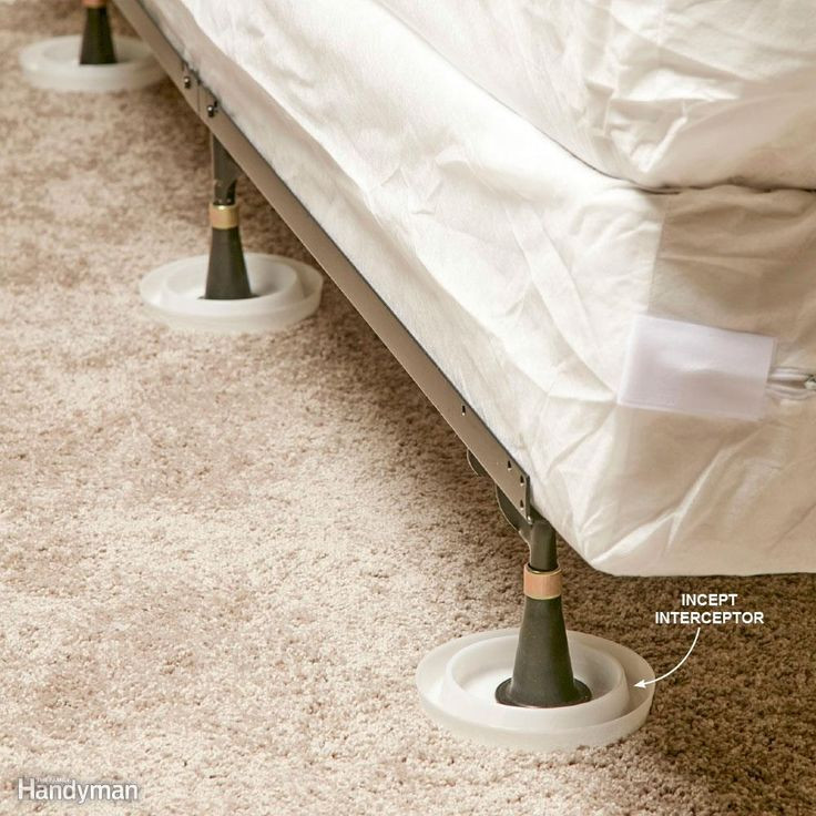 Best ideas about DIY Bed Bug . Save or Pin Best 25 Bed bugs ideas on Pinterest Now.