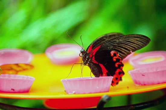 Best ideas about DIY Butterfly Feeder . Save or Pin 19 DIY Butterfly Feeder Ideas Now.